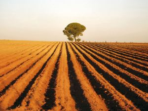 jovenes_agricultores_ayudas_eficiencia_energias_renovables_andalucia